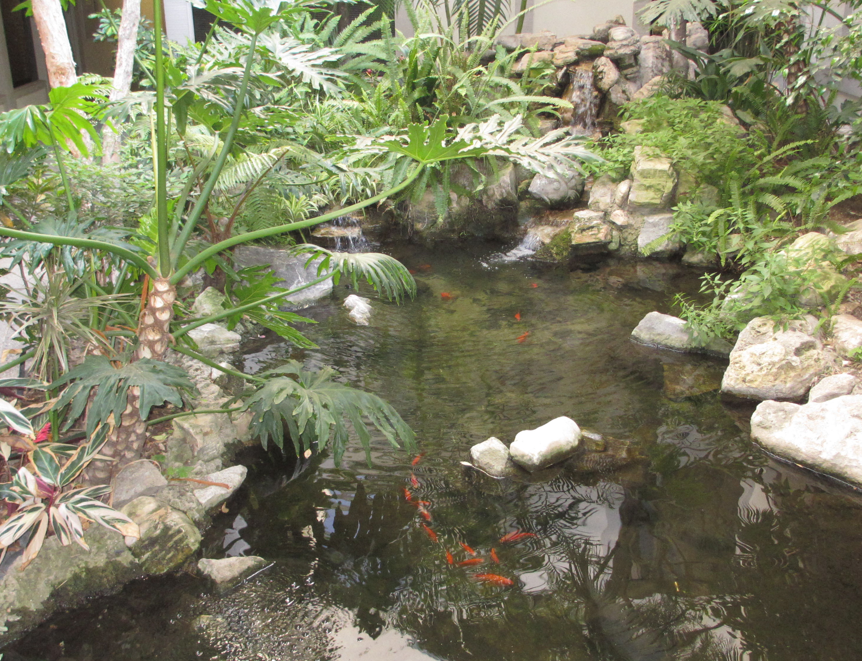 picture of waterfall and koi pond